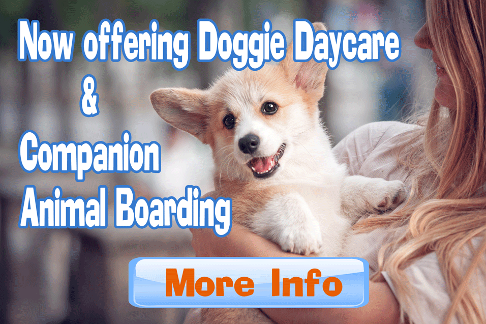doggie-daycare-pvpets.png